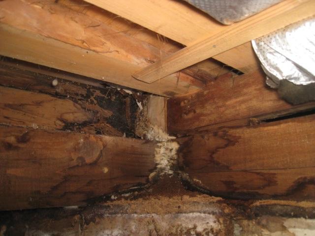 屋根や外壁の劣化で起きる雨漏りを放置したらどうなる?